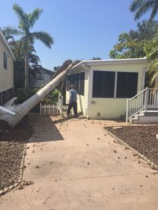 palm tree on park model home after Hurricane Irma